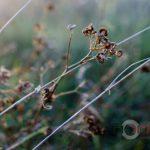<strong>Час навколотернопільських сухих квітів (фото)</strong>