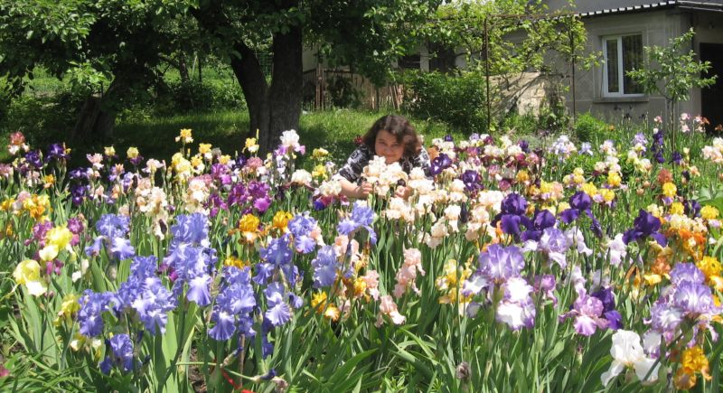 «Любов до ірисів успадкувала від бабусі і продовжила її справу»: у колекції тернополянки – понад 300 сортів цих квітів